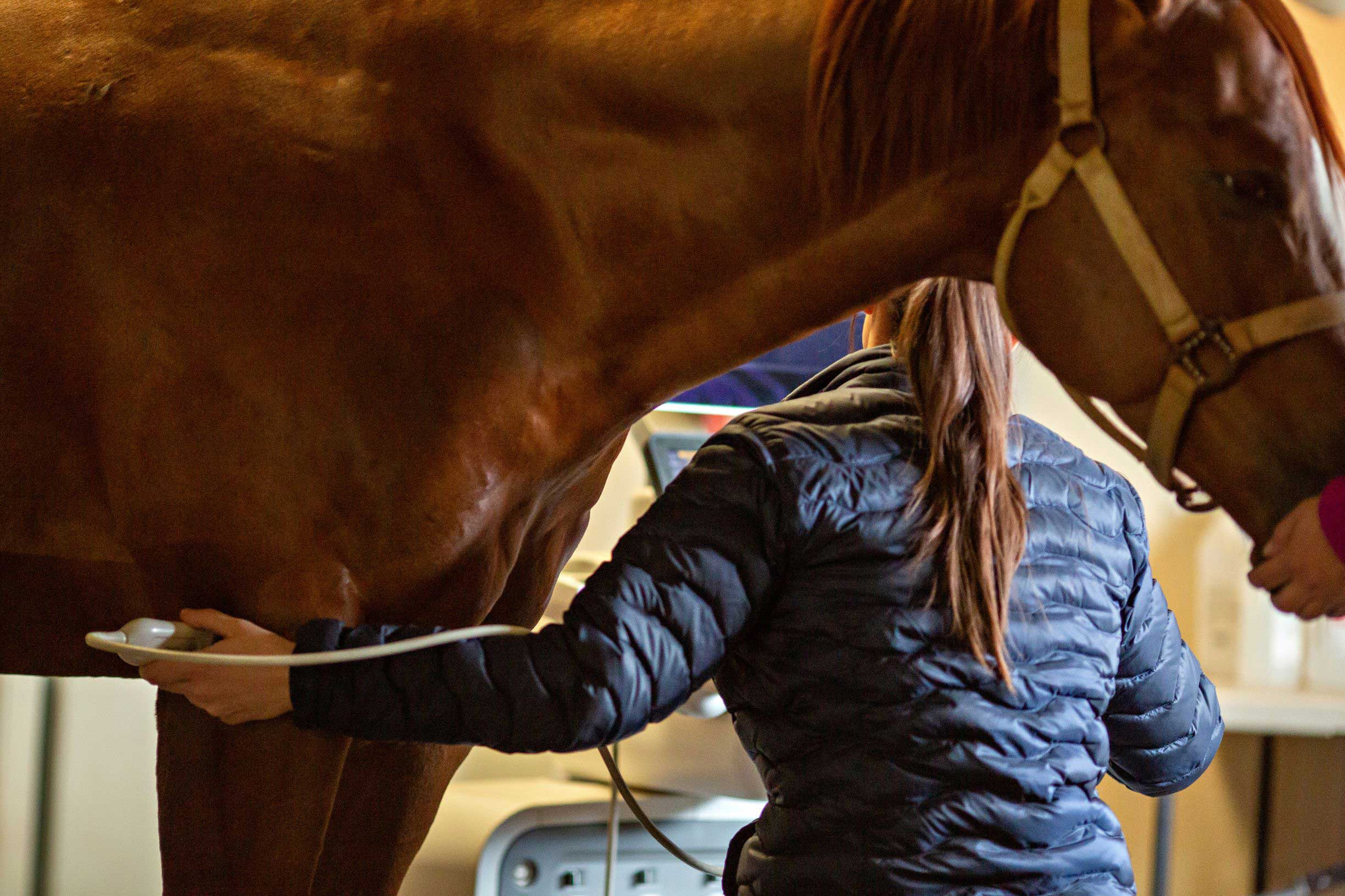 Equine Ultrasound Machine: Everything You Need to Know